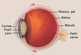 Spotlight on Glaucoma